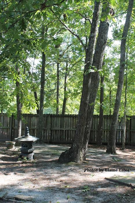 my simple pleasures t trees joyful2beeblogs