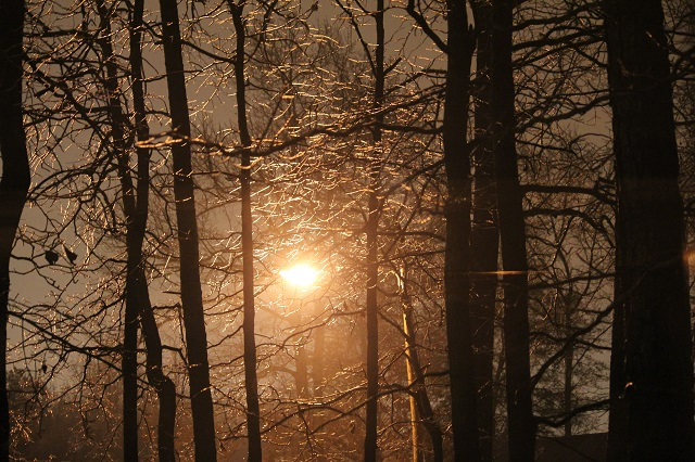 Streetlight through ice laden trees at night.