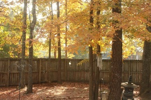 Old backyard in fall.