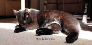 Black cat sleeping in sunshine.