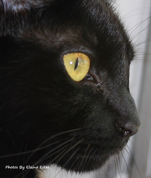 Black cat with gold eyes watching from the window.