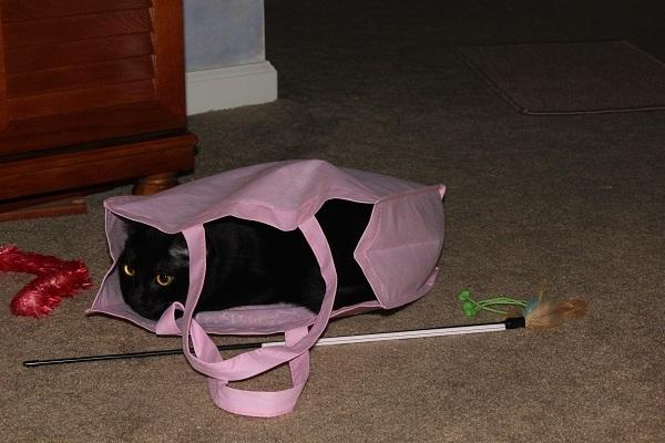Norie in cloth reusable bag.