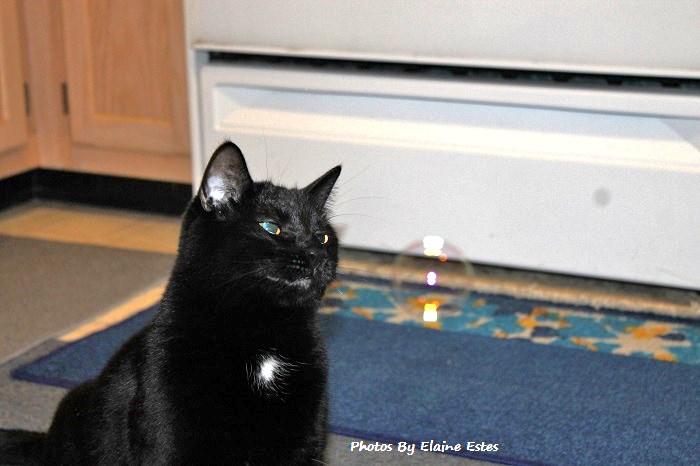 Black cat smiling at bubbles.