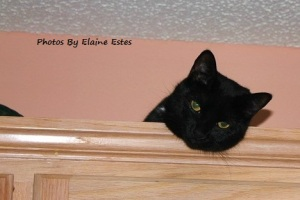 Black cat watching from above.
