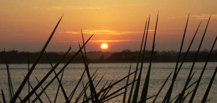 Sunrise through yuccas