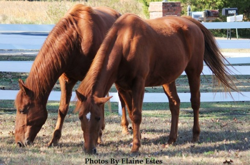 Mother and son horses