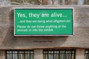 Real alligators sign at Asheboro Zoo.