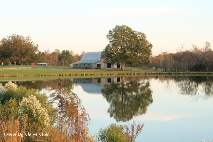 Lovely tree, barn and sky on a pond.