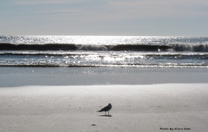 Lone seagull on beach