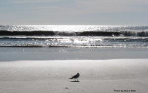 Lone seagull on beach