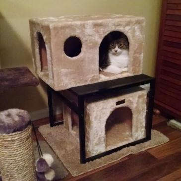 Cat hiding in cat boxes.