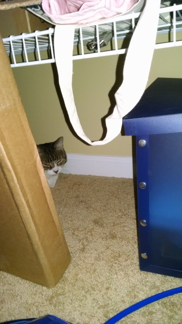 White faced tabby hiding behind boxes.