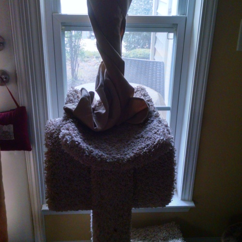 Norie twisted the curtain so she could see out the window.