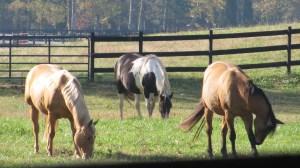 Three horses grazing.