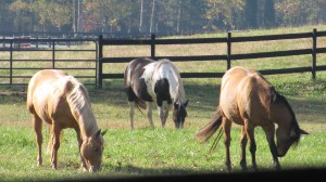 Three horses grazing.