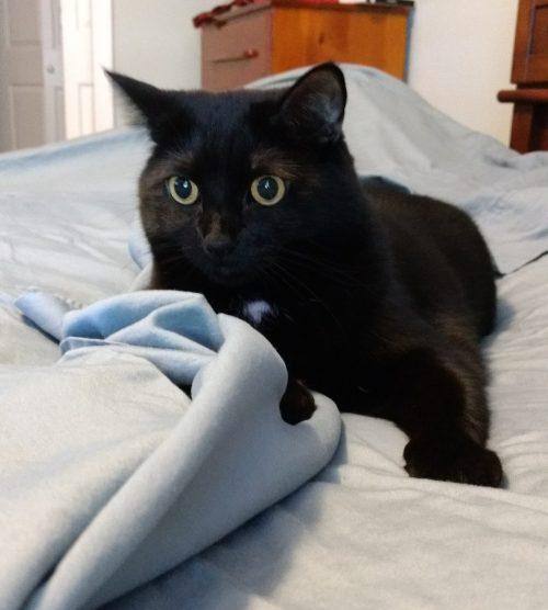 Black cat on bed.