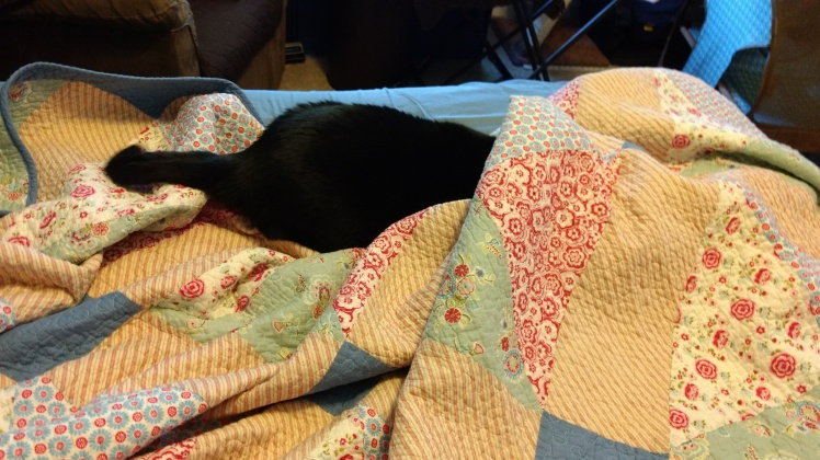 Black cat under quilt.