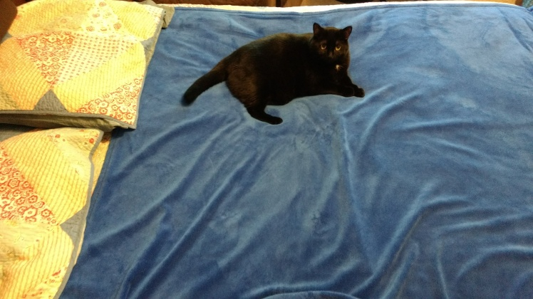 Black cat on top blanket.