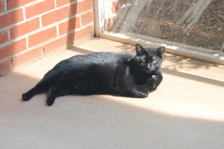 Black cat in sunshine.