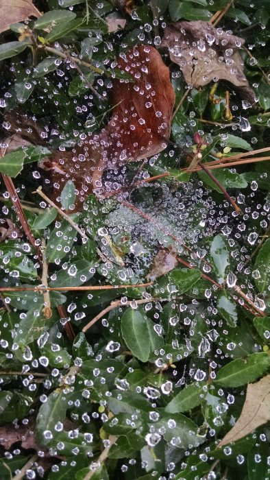 Dewdrops on web.